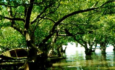 talisay-mangrove
